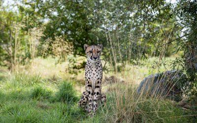 Hamerton Zoo Park Opens